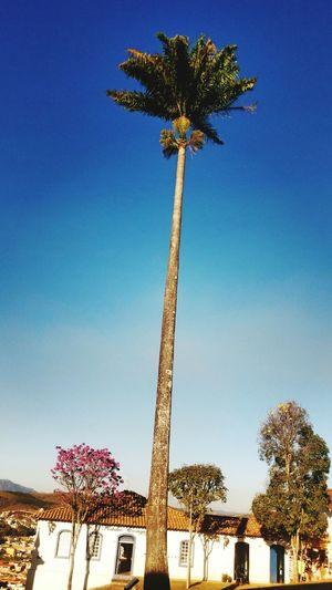 Tree And Sky Tree Tress