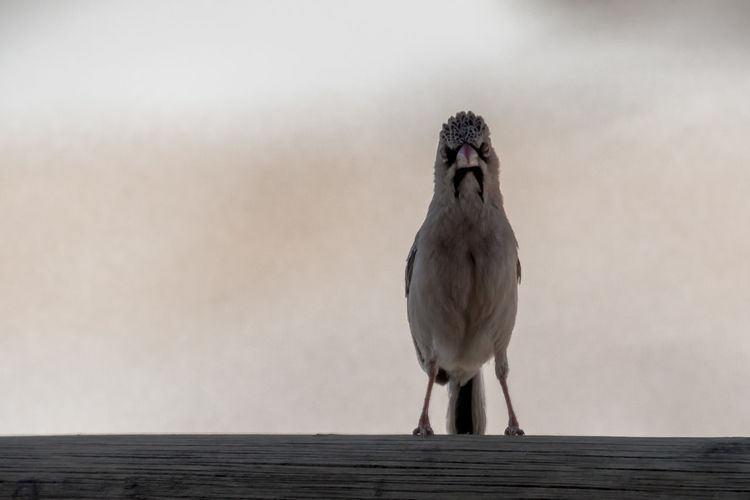 Bird perching on railing against sky