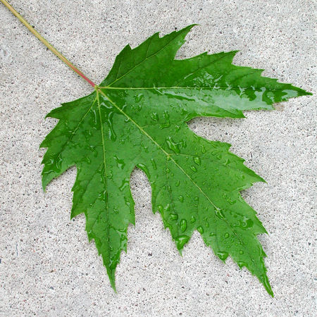 Beauty In Nature Close-up Concrete Day Directly Above Drop Fragility Freshness Green Color Growth High Angle View Leaf Leaf Vein Nature No People Outdoors Plant Plant Part Water Wet