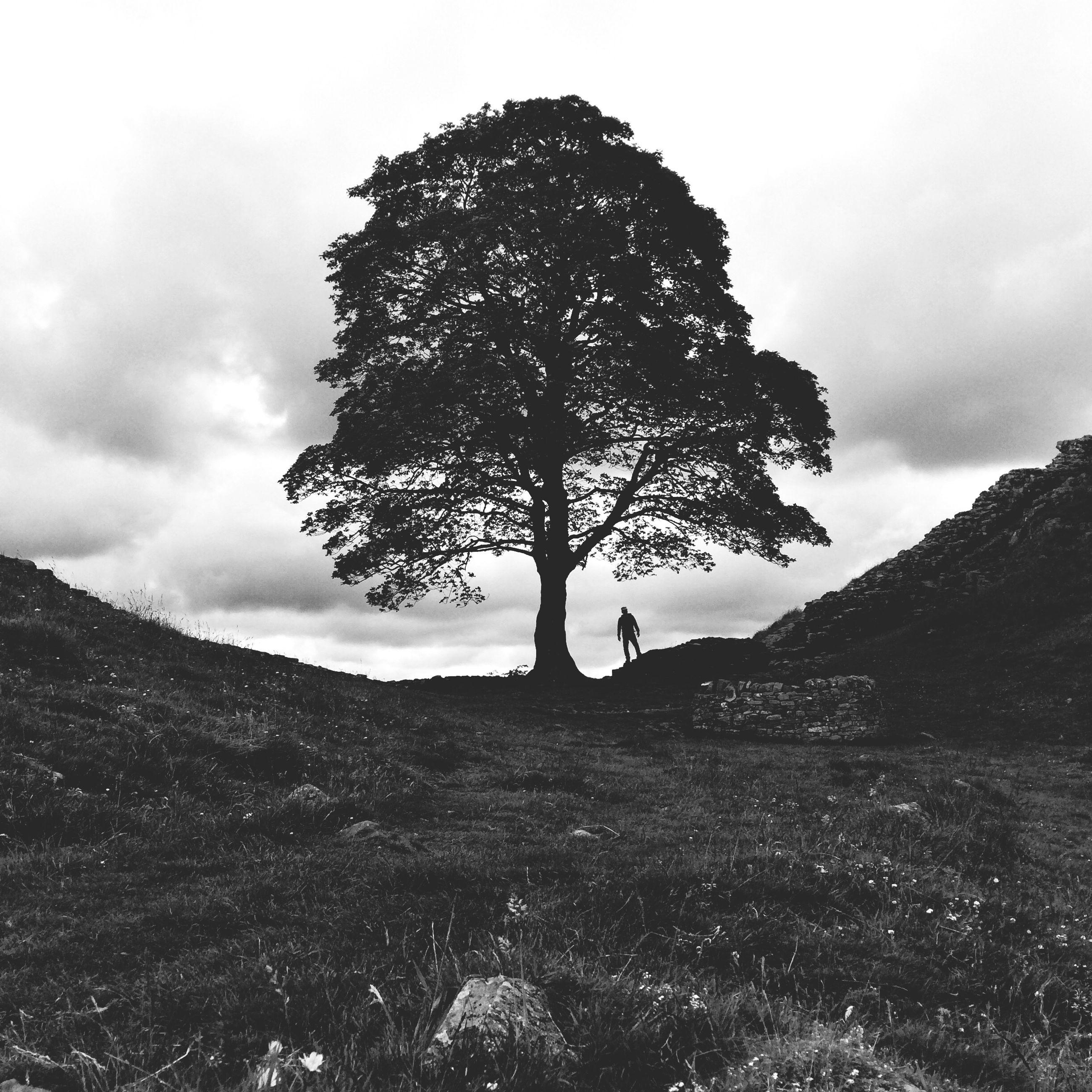 IPS2015Trees