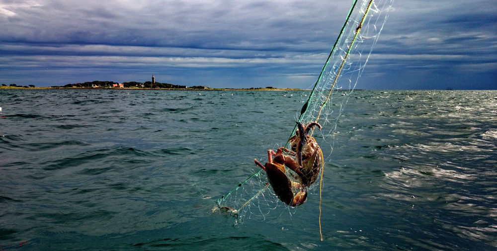 Crabs in the Net Sea Cloud - Sky Water No People Sky Hanging Outdoors Nautical Vessel UnderSea Nature Maritime Fishing Sommergefühle
