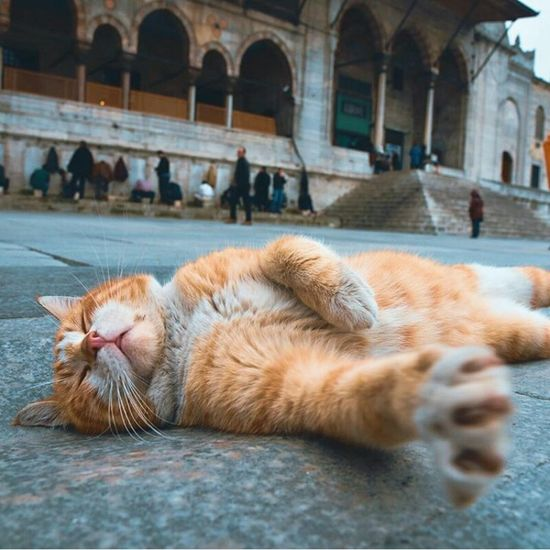 Animal Themes Domestic Animals Mammal Pets Domestic Cat Lying Down One Animal Feline No People Outdoors Day
