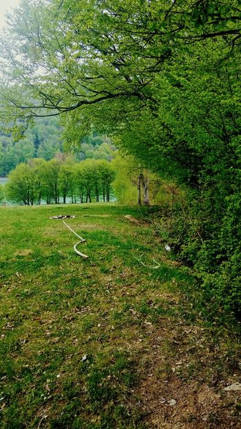 Grass Nature Growth Green Color Field No People Beauty In Nature Landscape Outdoors Day Full Frame Tree Scenics Water Springtime Spring Landscape Romanian Forest Romania_places
