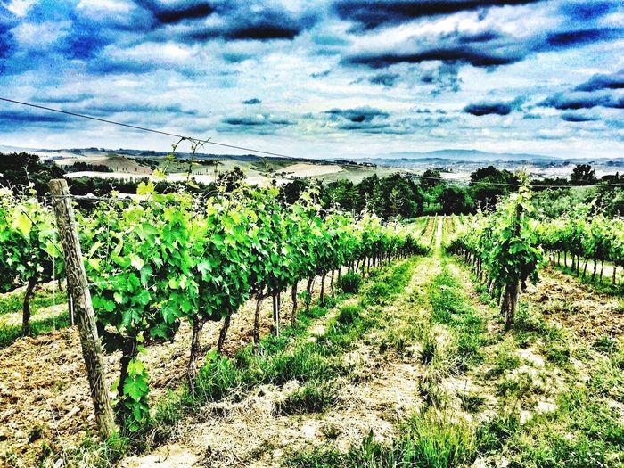 Wine Nature Farm Landscape