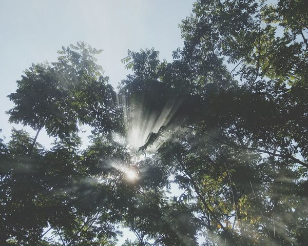 Tree Nature Low Angle View Outdoors No People Day Forest Sky Beauty In Nature Growth Tree Area Freshness Nature Tree Sunshine