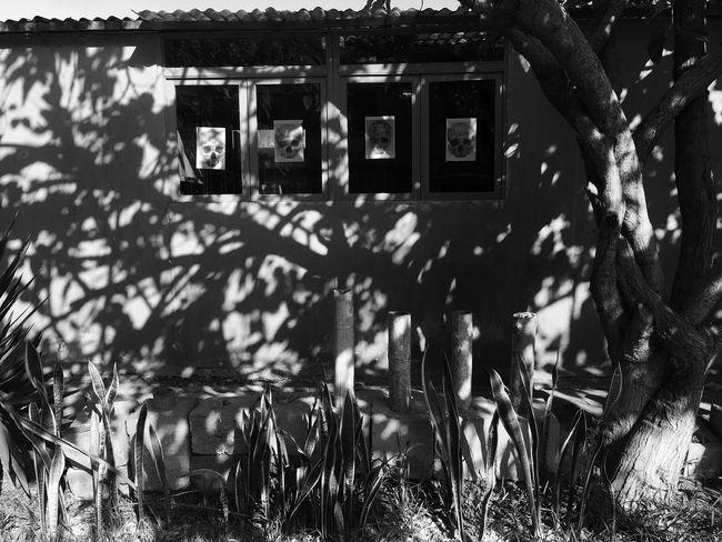 Huacas Window Shadows