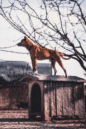Dogs Of EyeEm