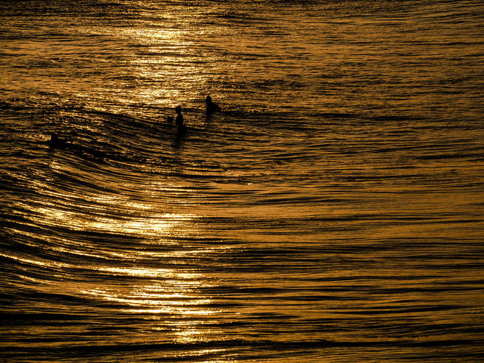 High angle view of people swimming in sea during sunset