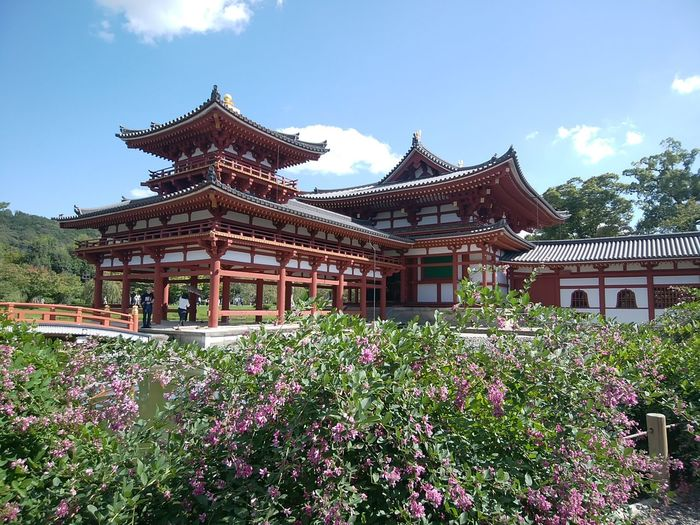 Lespedeza Bush Clover Japanese Clover Kyoto, Japan Would Heritage Byodoin Temple Oblique From Behind At 8 O'clock Early Autumn Flower Architecture Plant