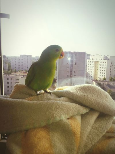 Parrot on tower Relaxing Hi! Birds Parrot Cute Pets Hello World Building Natolin
