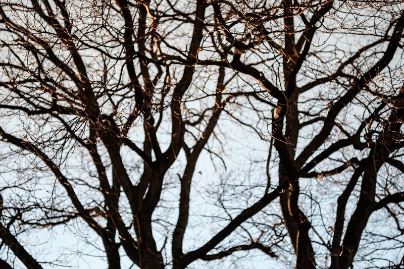 Tree Bare Tree Branch Nature Low Angle View Sky Tranquility No People Outdoors Day Beauty In Nature Backgrounds Showcase: December Tree Wintertime Fuji-xe2s Tenebrio.photos Zeiss60mm