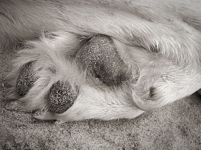 Wishy A Dogs Life Beach Dog Paws Sand Monochrome I Love My Dog Life Is A Beach Beachphotography Maximum Closeness Pet Portraits