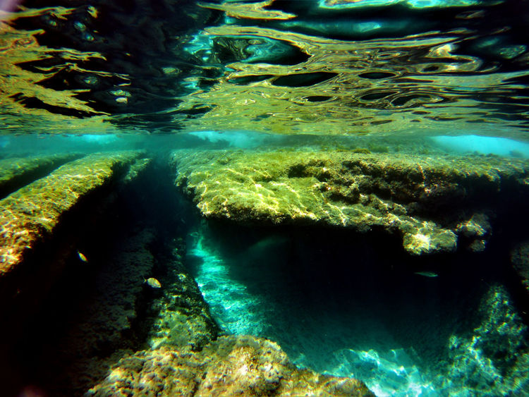 Cala Mesquida Mallorca Snorkeling Animal Themes Backgrounds Beauty In Nature Close-up Day Full Frame Nature No People Outdoors Reef Sea Sea Life Turquoise UnderSea Underwater Underwater Photography Water