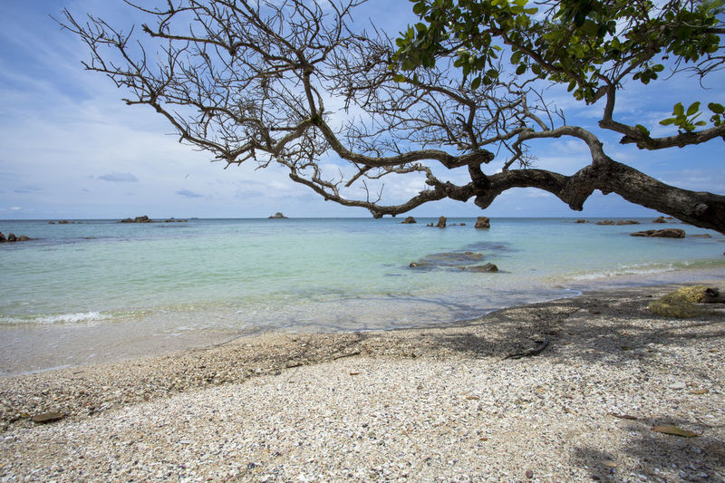 Beautiful beach with branch of tree at a tropical island INDONESIA Jemur Island Tropical Paradise Beach Beauty In Nature Branch Cloud - Sky Day Land Nature No People Non-urban Scene Outdoors Plant Scenics - Nature Sea Sky Tranquil Scene Tranquility Tree Tropical Water