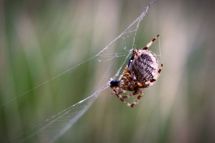 Spider Web Spider Close-up Animal Leg Animals In The Wild One Animal Beauty In Nature The Great Outdoors - 2017 EyeEm Awards