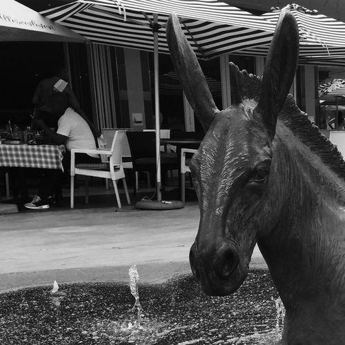 Man & beast Watersplash Waterdrops Water_collection Pretoria South Africa Streetphotography Streetphoto_bw Streetphoto Month Of January Street Photography Donkey Restaurant