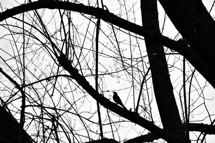 Black & White Find The Bird