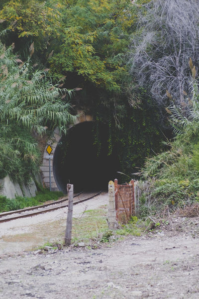 Railroad Tunnel Branch Day Fence Forest Grass Growth Lush Foliage No People Outdoors Plant Railing Railroad Railroad Tunnel Railway Tree Tree Trunk Tunnel WoodLand Woods
