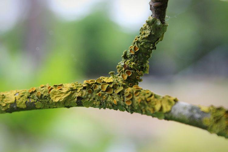 Macro Photography Close-up Green Garden Photography EyeEm Selects Branch Tree