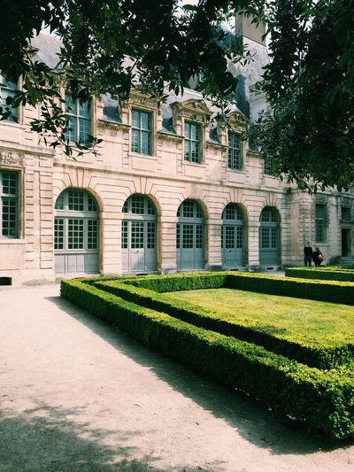 Hedge Outside Building At Le Marais