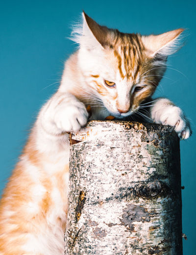 Close-up of a cat on a branch