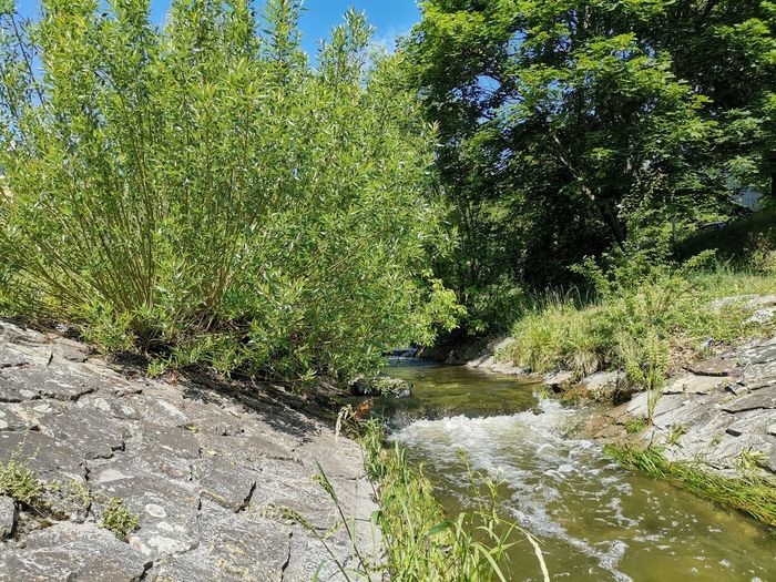 Plants growing by river in forest