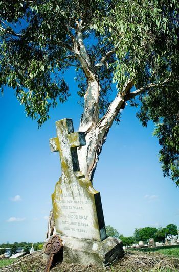 Tree Clear Sky Day Outdoors Graveyard Beauty Cemetery Photography Nikon D5100  No People Grass Weathered Stone Gravemarkers