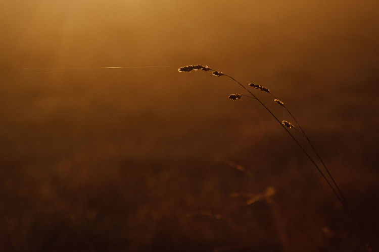 Blade of grass Nature Sunset No People Tranquility Close-up Silhouette Beauty In Nature Plant Outdoors Selective Focus Detail