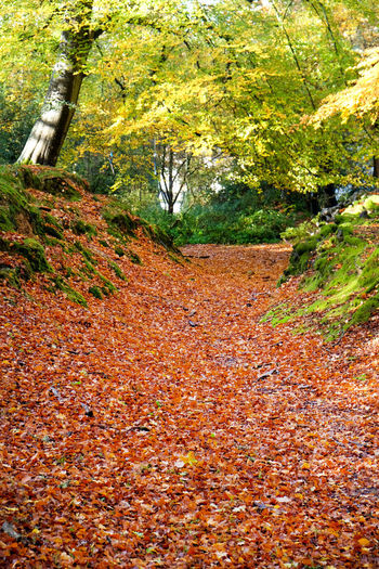 Bracken Brockenhurst Autumn Change Tree Leaf Plant Part Plant Nature Land Day Tranquility Growth Orange Color No People The Way Forward Beauty In Nature Direction Falling Outdoors Leaves Tranquil Scene Fall Autumn Collection Natural Condition