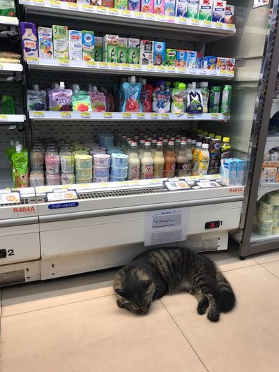 Animal Themes Animal Mammal Domestic Animals One Animal Pets Domestic Choice Large Group Of Objects Feline Cat Shelf Supermarket Vertebrate Store No People Domestic Cat Food Retail  Indoors