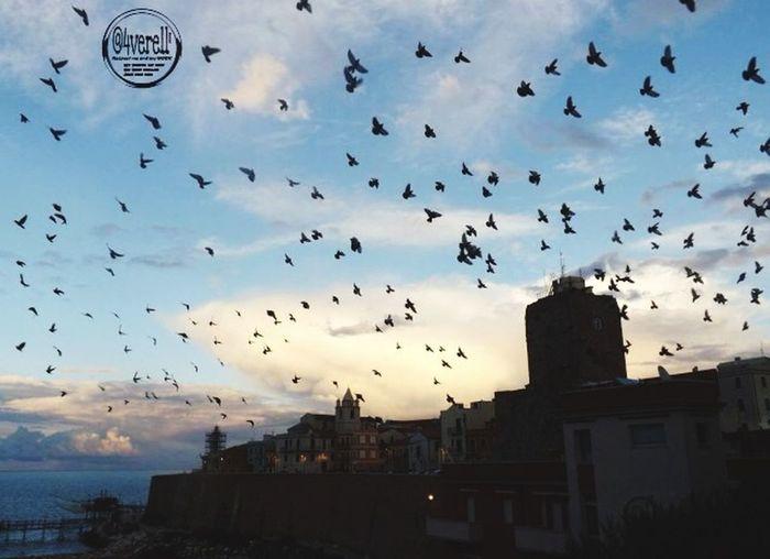 Sky Castel Of Termoli ❤️ Termoli  Lanscape Lanscape Photography Captured Moment Castello