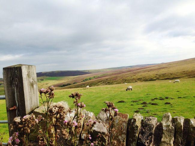 Nature On Your Doorstep The green hills far away