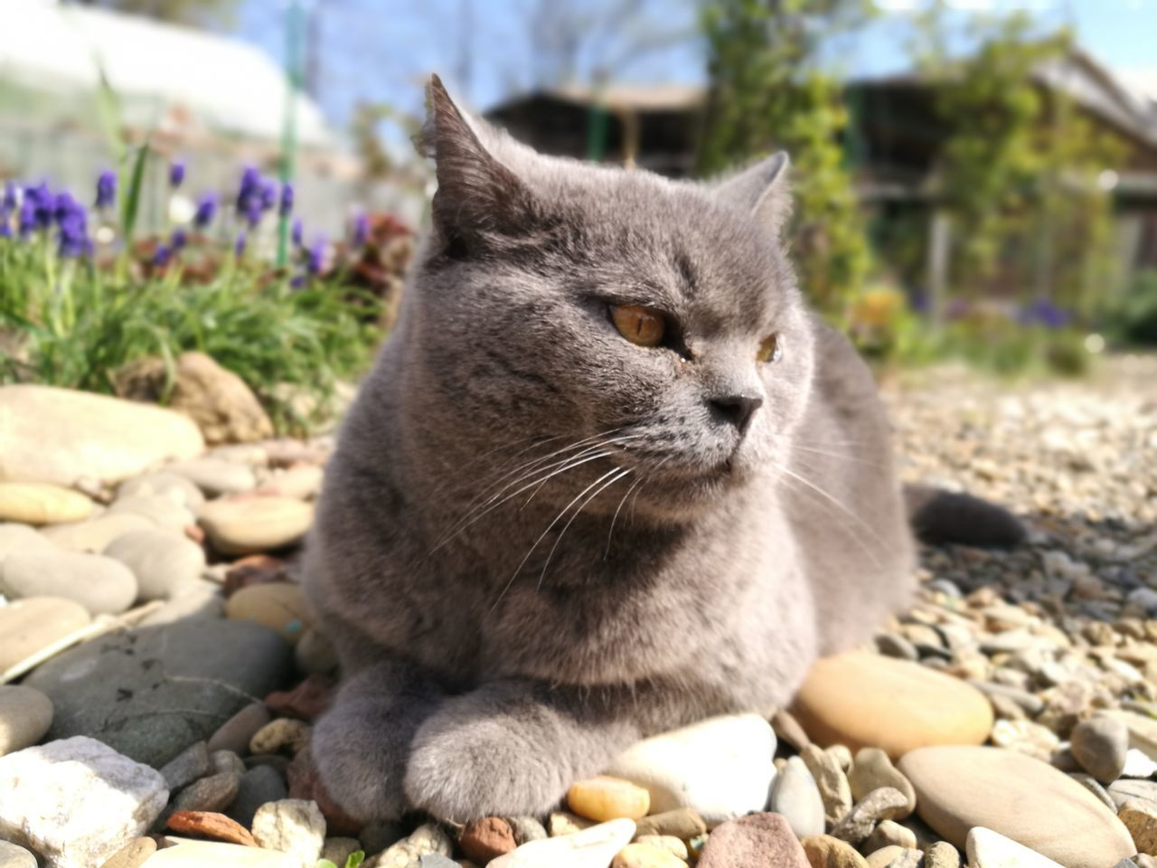 domestic cat, animal themes, one animal, feline, mammal, domestic animals, whisker, pets, focus on foreground, day, sitting, outdoors, rock - object, looking at camera, no people, sunlight, close-up, portrait, relaxation, nature