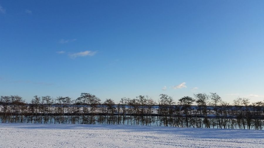 Cold Temperature Day Landscape Nature No People Outdoors Sky Tree Winter