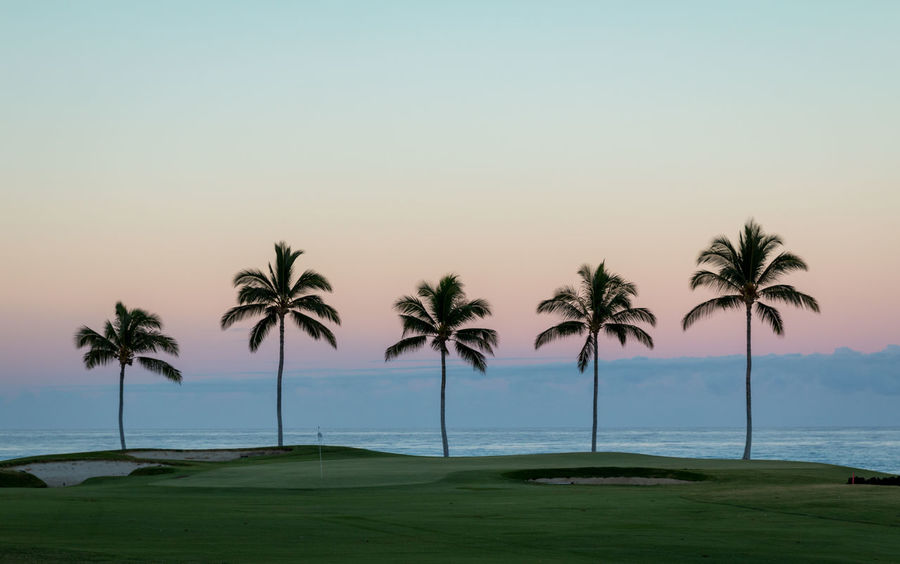 Waikoloa Golf Resort Beach Course!🌞🌞 Landscape Nature Palmtrees Palm Tree Beach Scenics Pattern Vacations Leisure Activity Sports Golf Course Golf Sunrise Dramatic Sky Resort in Big Island Hawaii United States