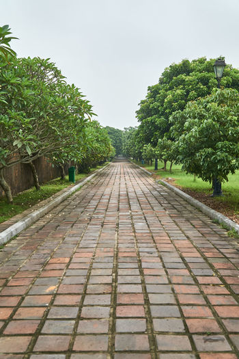 Day Growth Imperial City Nature No People Outdoors Sky Symmetry Symmetrybuff The Way Forward Tree Vietnam