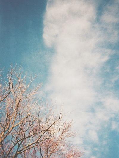 nostalgia...ブランコを、高く高く空高く飛んでいってしまうくらい思い切りこいで笑い転げていた幼少期を思い出すような・・・ Film Photography 35mm Fujifilm Sky Showcase March フィルム写真 写ルンです 空 Showcase March