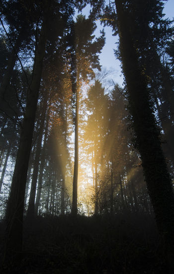 Light Atmosphere Beauty In Nature Black Darkness Darkness And Light Forest Low Angle View Magic Nature No People Outdoors Scenics Sunlight Sunlight Tranquil Scene Tranquility Tree Tree Tree Trunk Treesandsky WoodLand