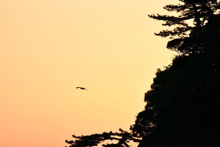 Sky Tree Sunset Bird Vertebrate Animal Themes Silhouette