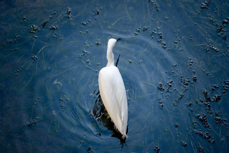 High angle view of white bird on lake