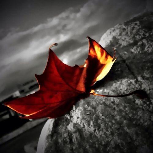 My Leaf ...
