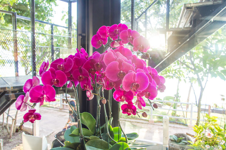 Beauty In Nature Close-up Day Flower Flower Arrangement Flower Head Flower Pot Flowering Plant Fragility Freshness Glass - Material Growth Indoors  Nature No People Pink Color Plant Plant Part Sunlight Transparent Vulnerability  Window