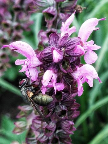 Flowerporn Insects  Macro_collection