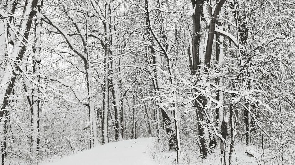 Winter Wonderland ❄ Woods Snow Covered Trees Nature Outdoors Natural Light Cold Markesan Wisconsin