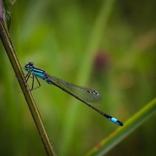 Damselfly Tiny Insect Nature Nature_collection Nature Photography Naturelovers Delicate Macro Macro_collection Macro Nature Macro Photography Close-up