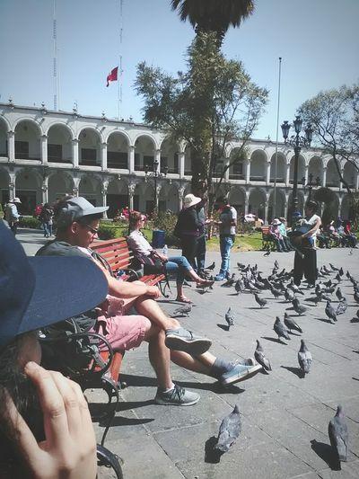 City Relaxing Taking Photos Peru Encanto Canonphotography Cheese! Tarde  Mi Camara Canon_official Canonsx60hs Canon_photos Paloma Palomas Palomas Blancas Park Parque  Diversion