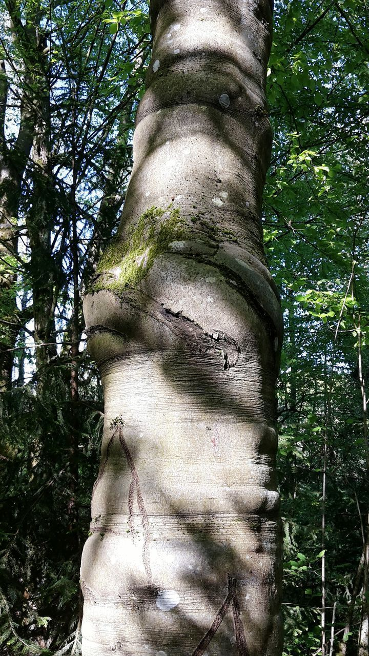 tree, tree trunk, forest, close-up, growth, nature, green color, outdoors, day, overgrown, woodland, beauty in nature, non-urban scene, tall - high, botany, no people