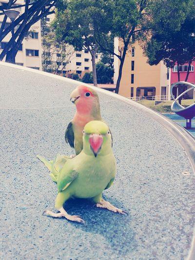 Pets Birds Birds Of EyeEm  Animals