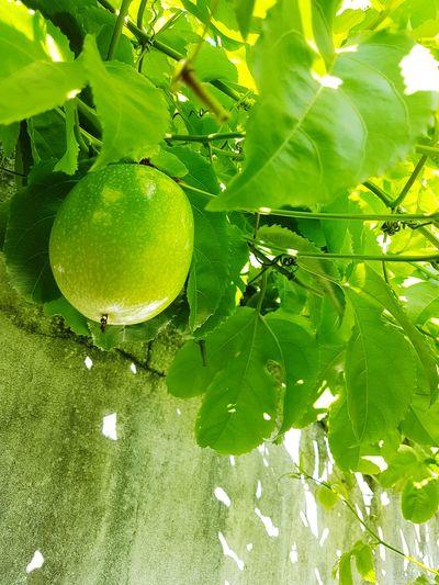 Green Color Nature Fruit Maracujá