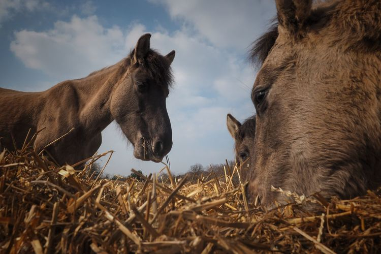 Horse Horses Nature Perspective Thuringia Olympusphotography Olympus Animallovers Naumburg Animals In The Wild Wildhorses Wildlife Animals Animal Themes Germany Day Rural Scene Portrait Sky Close-up Animal Body Part Ear Nose